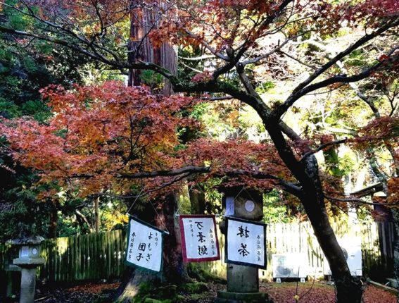 PHOTO-FOR-DESTINATIONS-PAGE-Two-days-in-Nara-Japan