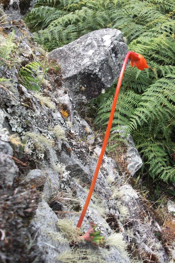 6C_the_inca_trail_peru