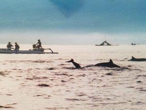 Dolphins surround us.